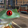 A Frog in City
