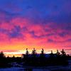 Amazingly Colorful Sunrise Over Forest Jigsaw Puzzle