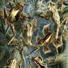 Amphibians Hidden Images