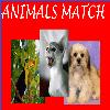 Animals Match