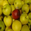 Apple Slider