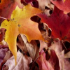 Autumn Leaves Slider