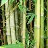 BAMBOO FOREST HIDDEN NUMBER