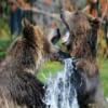 Bears Jigsaw