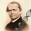 Bioquiz Mendel Genetics