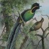 Birds of Paradise Jigsaw