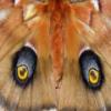 Butterflies Hidden Images
