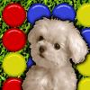 Cute Puppy Match
