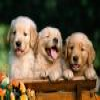 Dogs – 2 puzzle