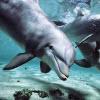 Dolphin Jigsaw