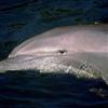 Dolphins Sliding Puzzle