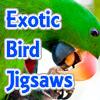 Exotic BIrd JIgsaw
