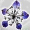 Flower Art Slider