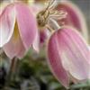 Flower Jigsaw