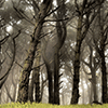 Foggy Forest Jigsaw Puzzle