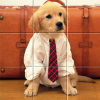 Funny Animals Puzzle