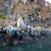 Galapagos Islands Jigsaw
