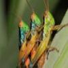 Grasshoppers Slider