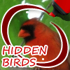 Hidden Birds
