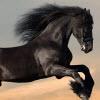 Horses Jigsaw
