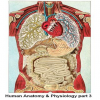Human Anatomy & Physiology part 3