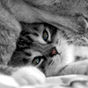 Kitten B&W