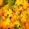 Leaves Hidden Images