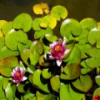 Lillies Slider