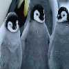 march of the penguins hidden numbers