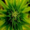 Marijuana Plant Slider