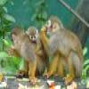 Monkeys – 1 Puzzle