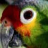 Parrot Eye Slider