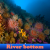 River bottom 5 Differences