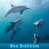 Sea Bubbles 5 Differences