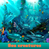 Sea creatures. Find objects