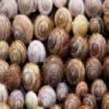 Snail Shells Slider