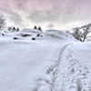 Snowy Trails Jigsaw Puzzle