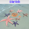 Starfish. Find objects