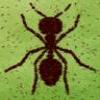 The Secret of Ant