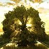 Tree Jigsaw