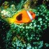 Tropical Fish Sliding Puzzle