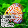 Tropical Fish Tournament