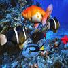 Underwater Hidden Object