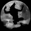 Werewolf find numbers